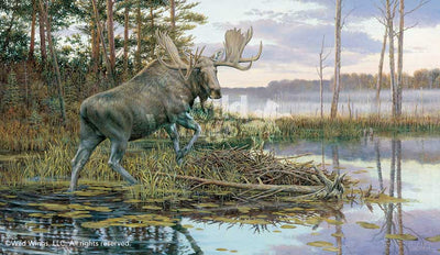 Backwater Bull-Moose Art Collection