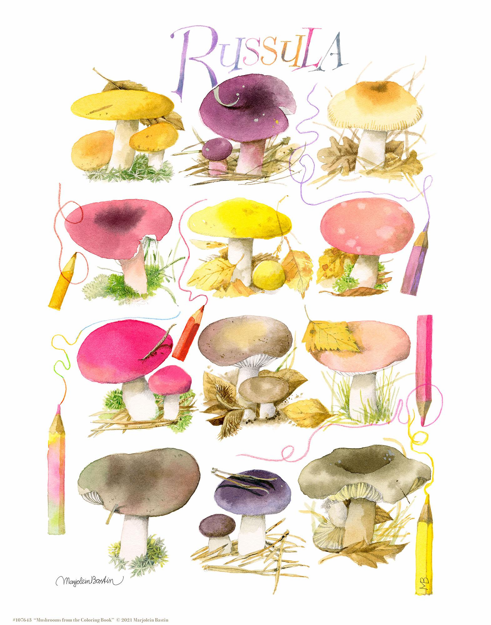 Mushrooms for the Coloring Book Art Collection