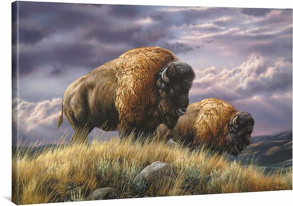 Nomads of the Plains—Bison.