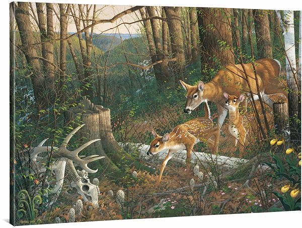 <I>Oak Ridge Renewal&mdash;whitetail Deer</i> Gallery Wrapped Canvas