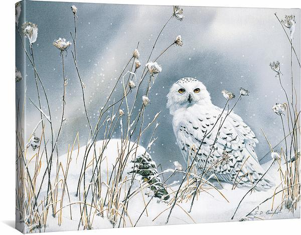 <I>On The North Wind&mdash;snowy Owl</i> Gallery Wrapped Canvas<Br/>19H X 24W Art Collection
