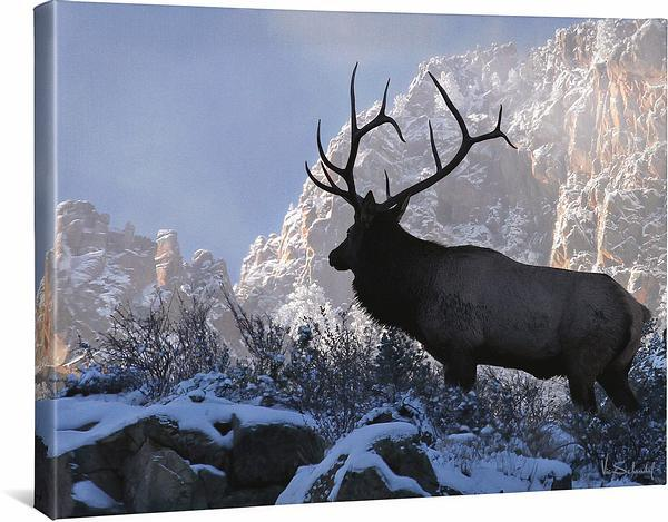 <I>On Top Of The World&mdash;bull Elk</i> Gallery Wrapped Canvas