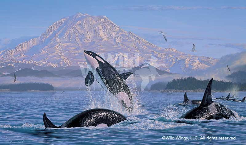 <i>On the Pacific Rim&mdash;Orcas</i>