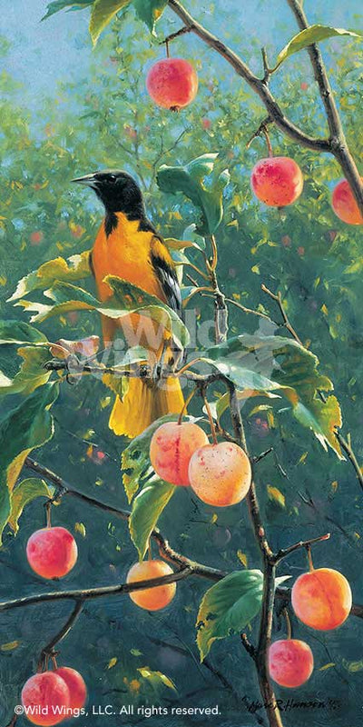Oriole in the Orchard Art Collection