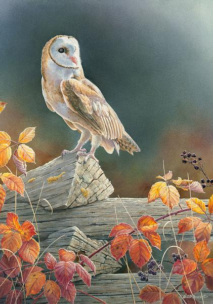 Out Of The Shadows&mdash;barn Owl Limited Edition Print<Br/>24H X 17.5W Art Collection
