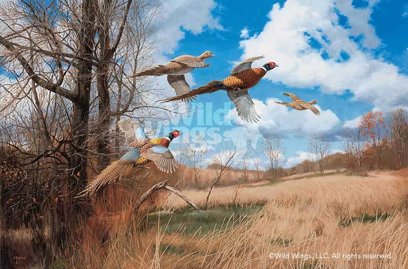 <I>Tomahawk Trail&mdash;pheasants</i> Artist Proof Print<Br/>16.5H X 25W Art Collection