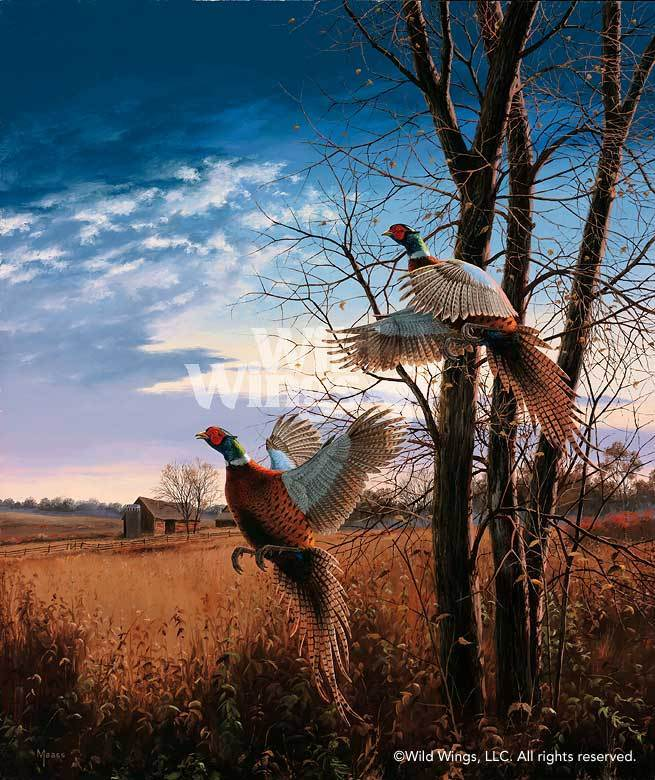 Evening Flight—Pheasants.