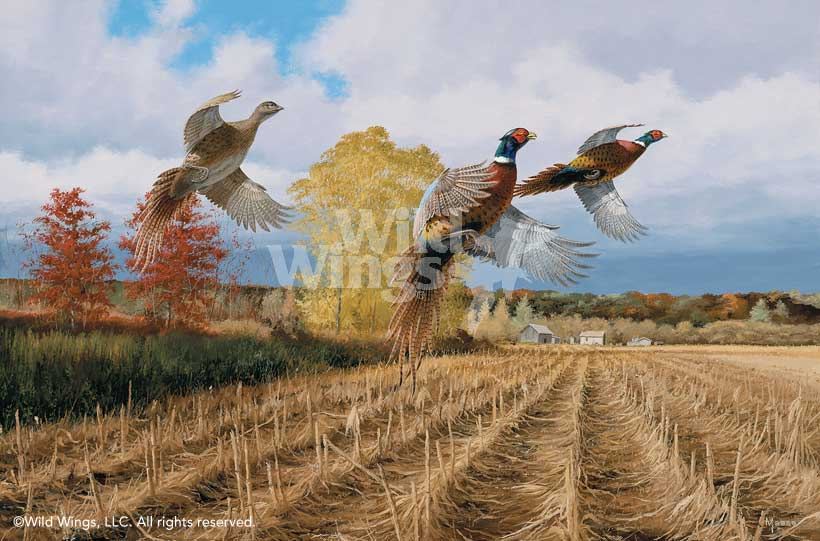 Hasty Ascent—Pheasants.