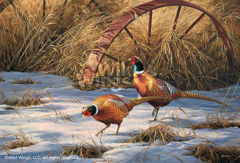 Heartland Heritage-Pheasants Art Collection