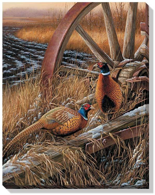 Rustic Outlook—Pheasants.