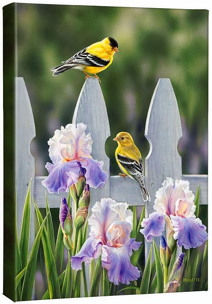 <I>Picket Fence&mdash;goldfinches</i> Gallery Wrapped Canvas