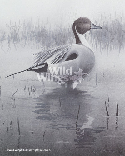 Misty Morning Sprig—Pintail.