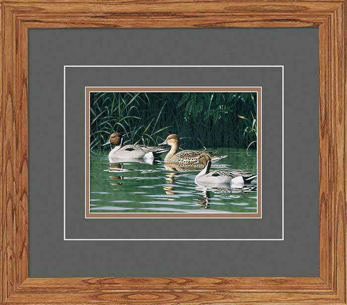 The Outsiders—pintails Gna Deluxe Framed Print