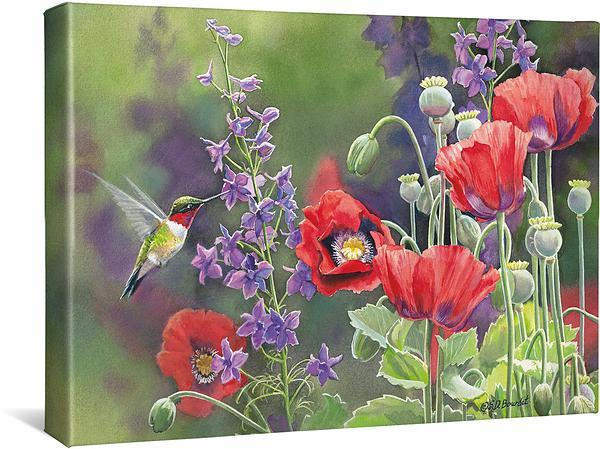 <I>Poppies&mdash;hummingbirds</i> Gallery Wrapped Canvas