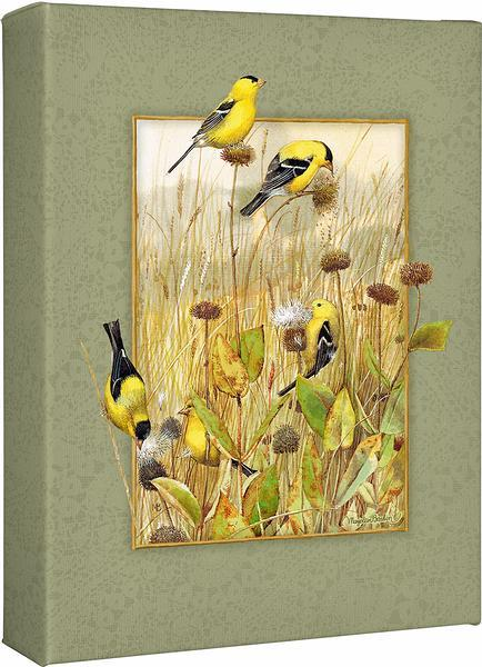 Prairie Canaries—Goldfinches.