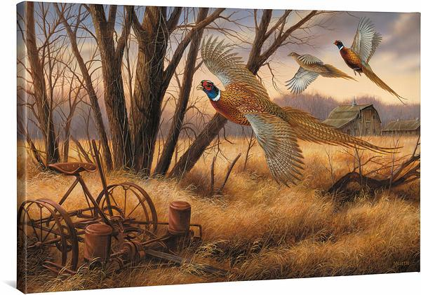 <I>Prairie Wings&mdash;pheasants</i> Gallery Wrapped Canvas<Br/>24H X 36W Art Collection