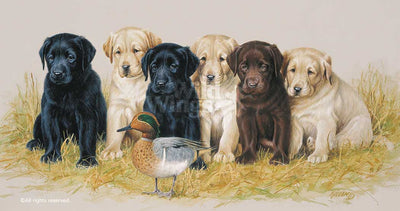 <i>The Greenhorns&mdash;Lab Puppies</i>