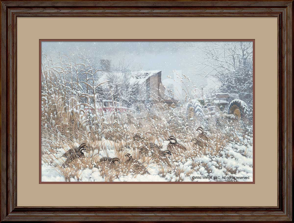 Hunkered Down-Quail Art Collection