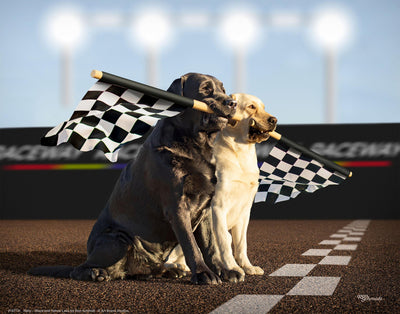 Rally-Black & Yellow Labs Art Collection