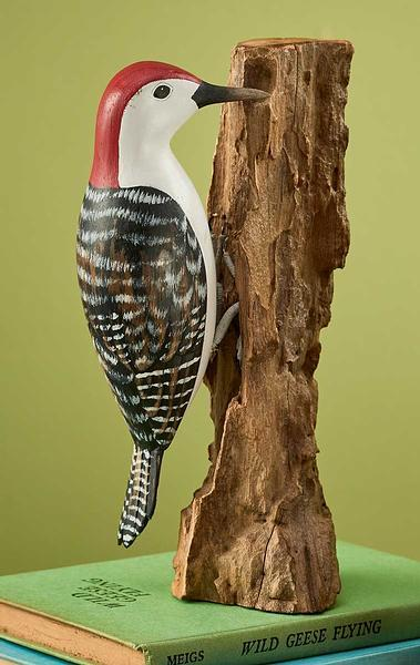 Red—bellied Woodpecker.