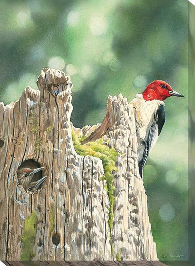 <I>Red-Headed Woodpecker & Family</i> Wrapped Canvas<Br/>18H X 13W Art Collection