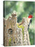 <I>Red-Headed Woodpecker & Family</i> Gallery Wrapped Canvas<Br/>18H X 13W Art Collection
