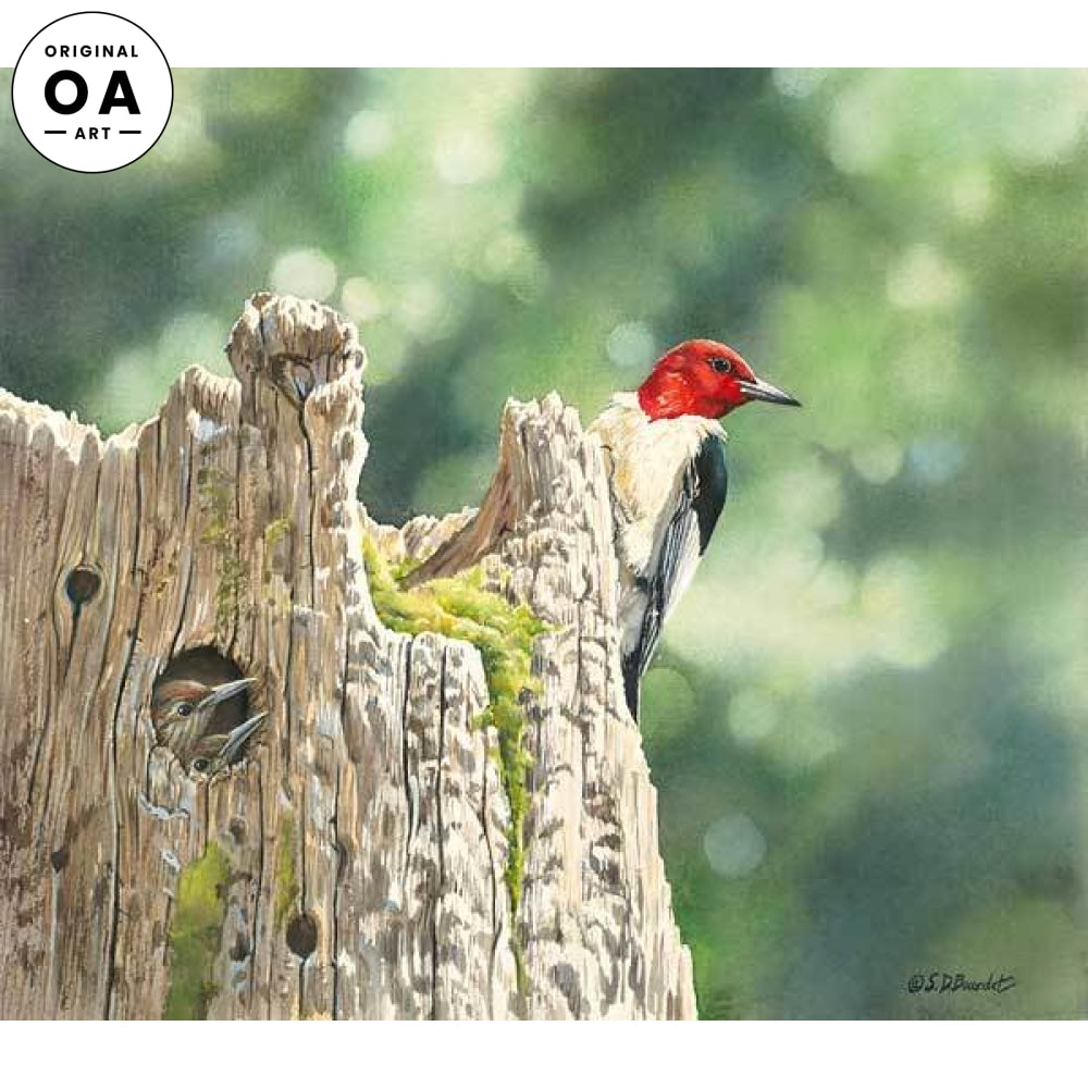 Red-headed Woodpecker Family Original Artwork
