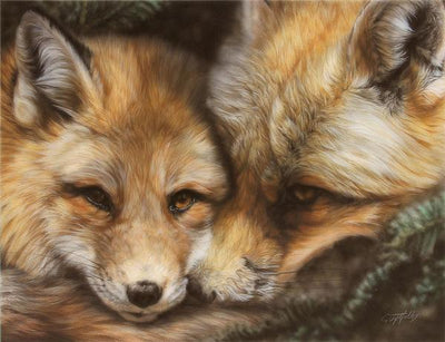 Red in the Face—Red Fox.