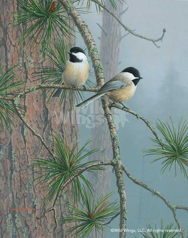 Red Pine & Chickadees Art Collection