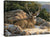 <I>Rocky Outcrop&mdash;mule Deer</i> Gallery Wrapped Canvas<Br/>13H X 18W Art Collection