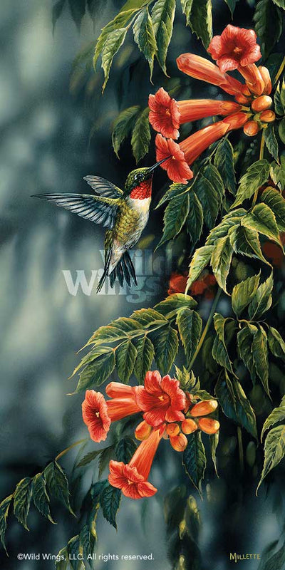 Summer; Ruby-throated Hummingbird Art Collection