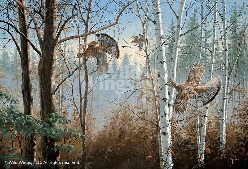 <i>Three Birds Up&mdash;Ruffed Grouse</i>