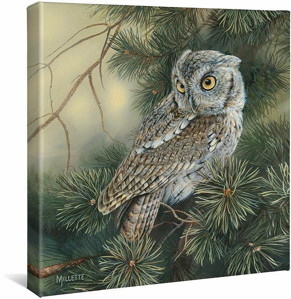 <I>Screech Owl</i> Gallery Wrapped Canvas