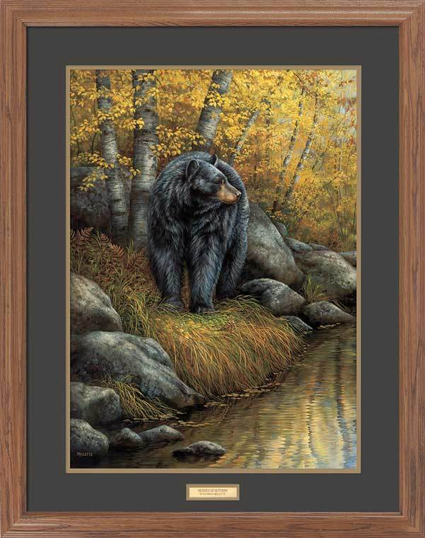 Shades of Autumn—Black Bear.