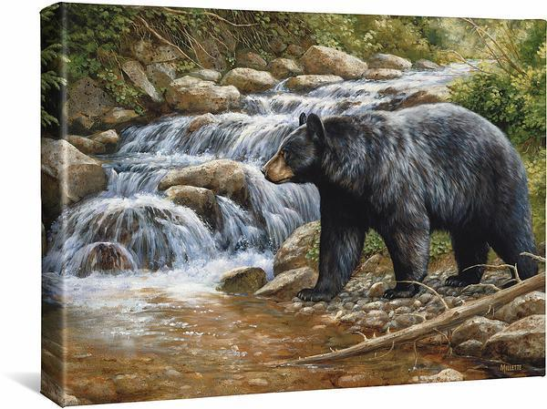 Shadow Of The Forest—black Bear Gallery Wrapped Canvas