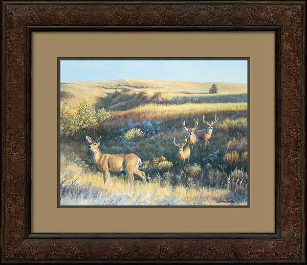Showing Off-Mule Deer Art Collection