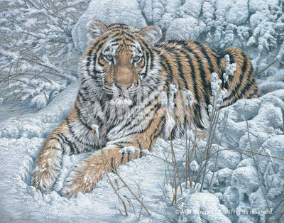 Snow Queen-Siberian Tiger Art Collection