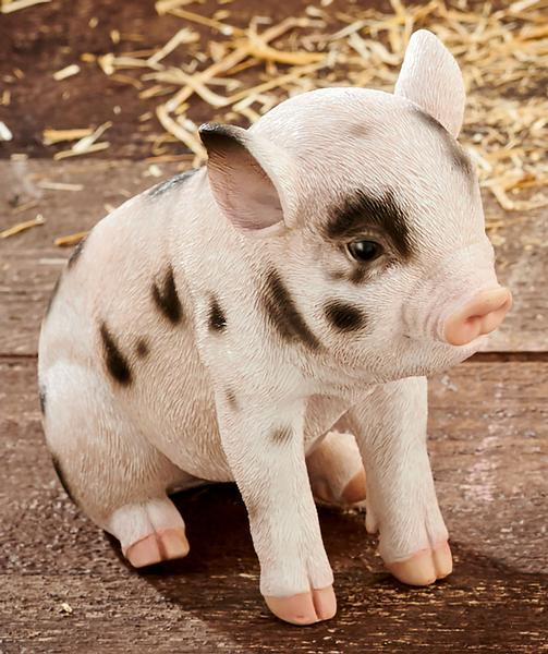 Sitting Baby Spotted Pig