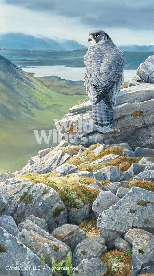 Sky King's Castle-Peregrin Falcon Art Collection