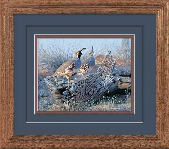 Two—Up—Gambels Quail