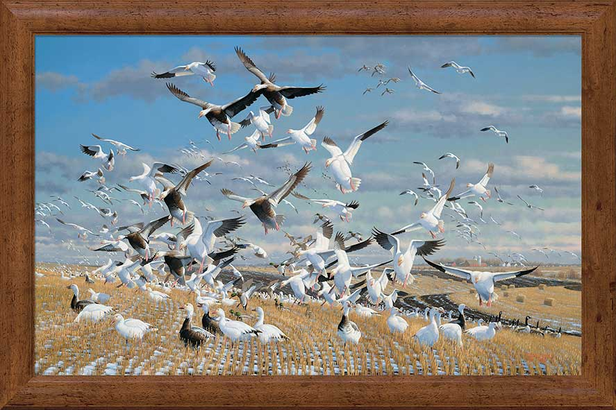 Canadian Gold-Geese Art Collection