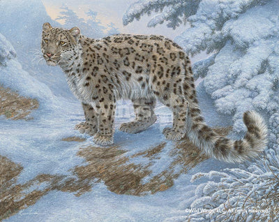 Snow Flurries—Snow Leopard.