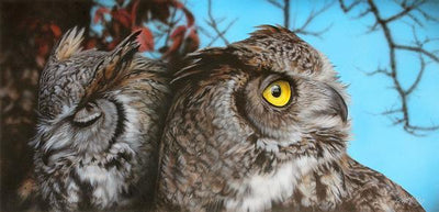 Sorry Am I Boring You—Great Horned Owls.