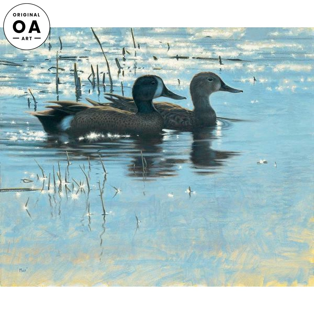Spring Shallows—Blue—wing Teal.