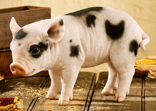 Spotted Piglet.