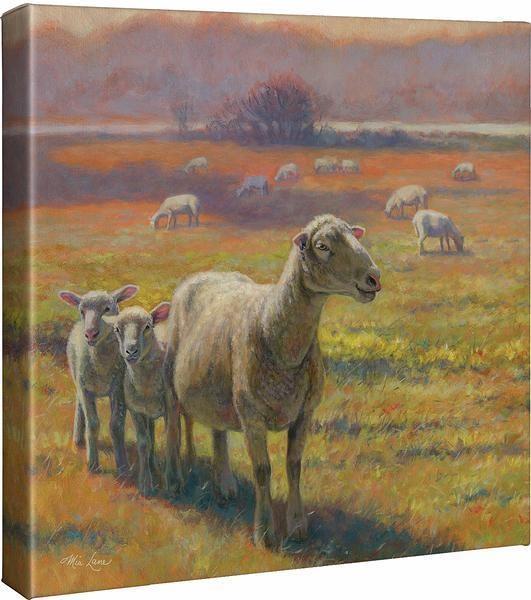 Standoff—sheep Gallery Wrapped Canvas