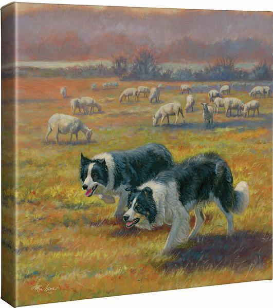 Standoff—collies Gallery Wrapped Canvas