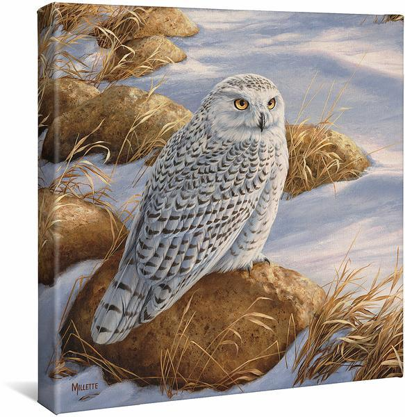 <I>Stoney Outlook&mdash;snowy Owl</i> Gallery Wrapped Canvas