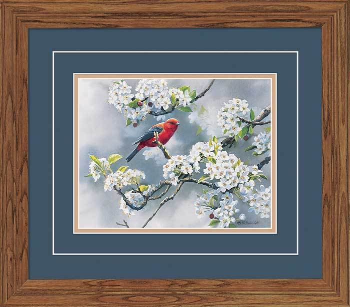 Scarlet Tanager Gna Deluxe Framed Print