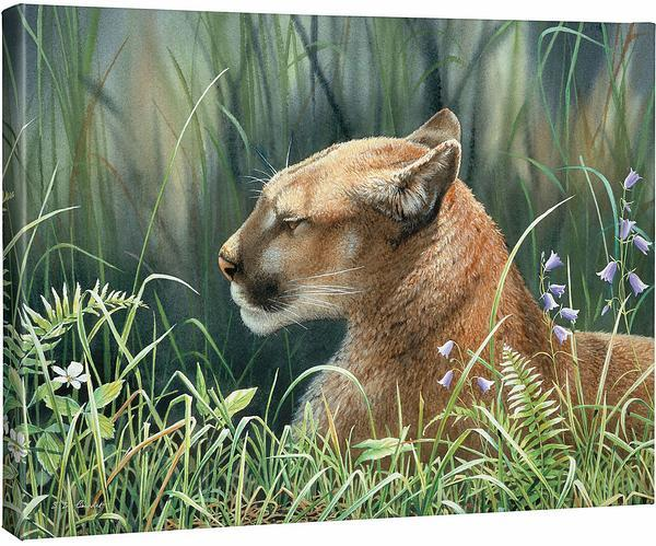 <I>Sunlight Siesta&mdash;cougar</i> Gallery Wrapped Canvas